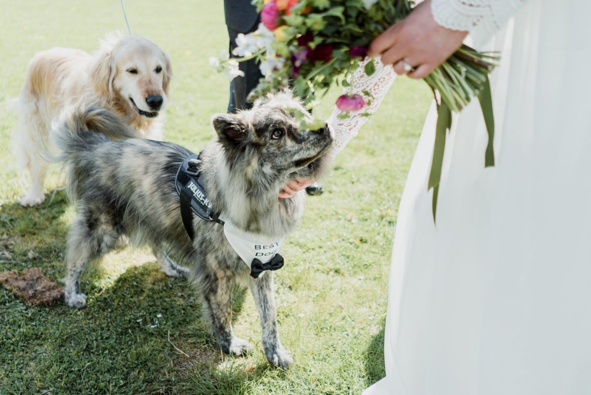 Unique weddings details: Include your pets in the wedding ceremony by having a 'best dog'