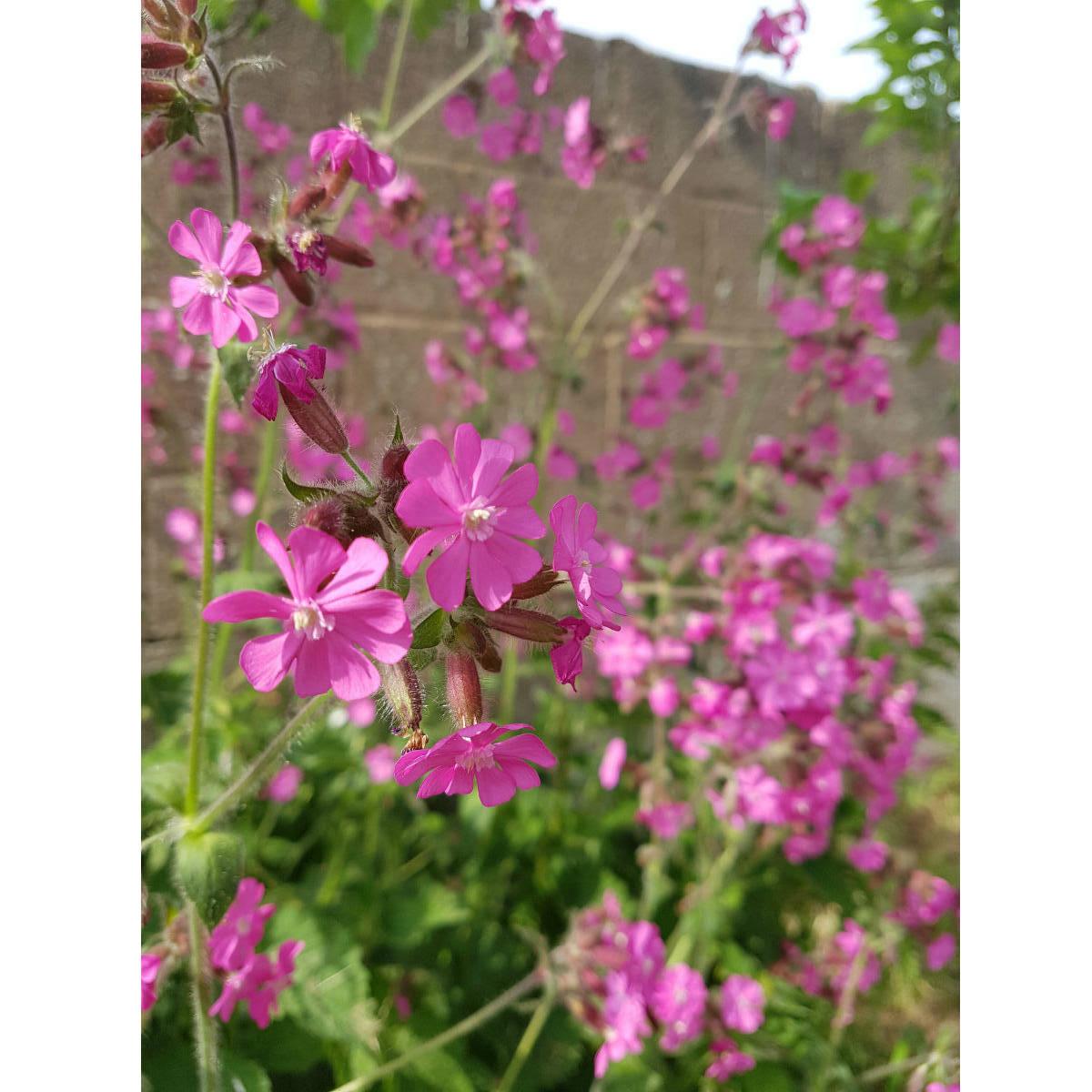 Seedball Tin Butterfly Mix | Restoration Yard