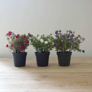 Grand Illusions Mini Flower Pot Mix | Restoration Yard