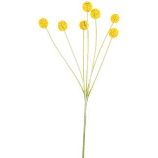 Flower Craspedia by Grand Illusions | Restoration Yard