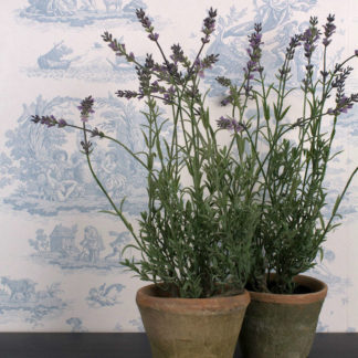 Lavender in Pot by Grand Illusions | Restoration Yard