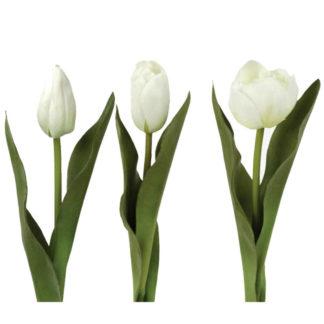 Tulip White by Grand Illusions | Restoration Yard