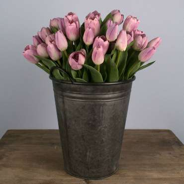 Tulips are the flower of Easter